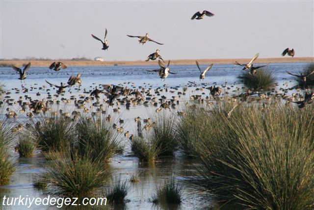 Manyas Kuş Gölü