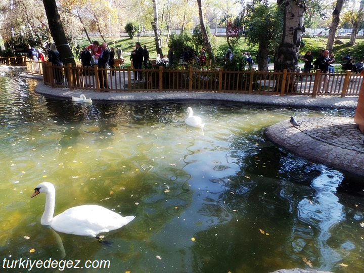 Ankara Kuğulu Park