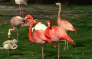 İzmir Kuş Cenneti