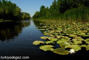 Acarlar Longoz Gölü