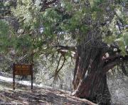 Sedir Araştırma Ormanı