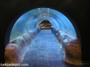 Keçiören Dev Akvaryum (Deniz Dünyası)